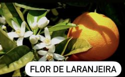 Essência Flor de Laranjeira