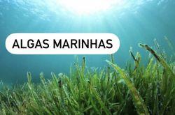 Essência Algas Marinhas
